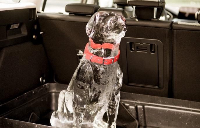 Ford safety dog