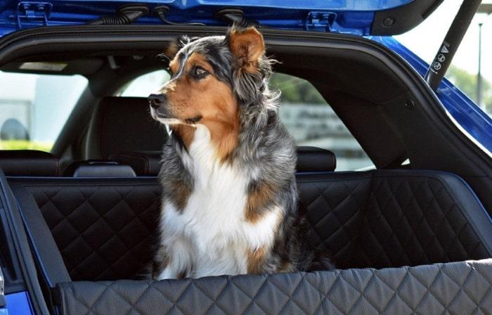Honden auto accessoires
